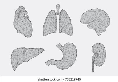 Set of geometric human anatomy with faceted low poly effect, vector illustration