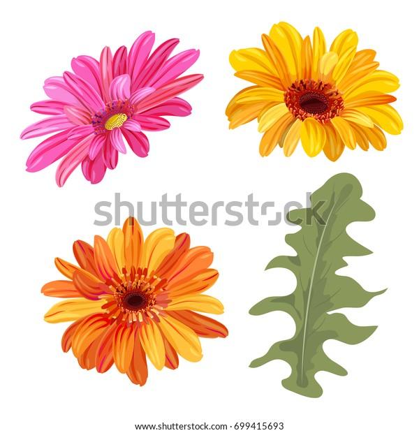 Orange Gerbera Daisy Clip Art