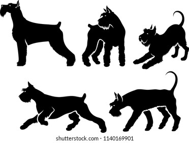 Set of Giant Schnauzer silhouettes - isolated vector illustration