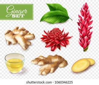 Set of ginger root and red flowers, tea in glass cup, isolated on transparent background vector illustration