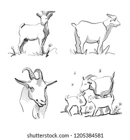 set of goats sketch