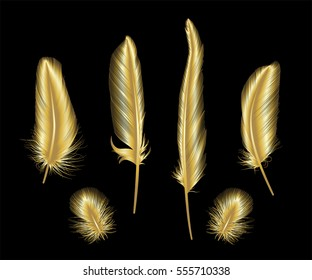 Set of gold  feather. Vector illustration. EPS 10.