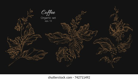 Set of golden coffee tree branches with realistic leaves and beans. Silhouette, art shape. Botanical illustration isolated on black background. Sketch, hatch. Vector nature collection. Organic eps.10