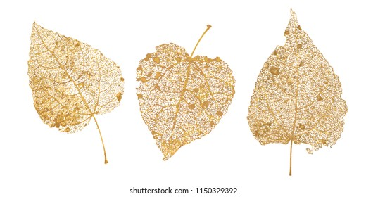 Set of golden leaves skeletons. Fallen foliage for autumn designs. Natural leaf of aspen and birch. Vector illustration.