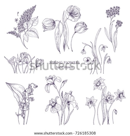Set Gorgeous Botanical Drawings Spring Flowers Stock Vector Royalty