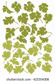Set the grape leaves. Isolated leaves of grapes on a white background.