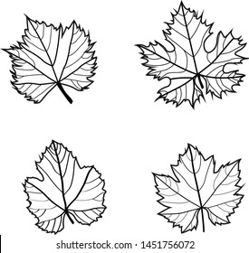 Set of Grape Wine Leaves Green on White Background Green & Black & White - Illustration Isolated Icon