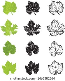 Set of Grape Wine Leaves Green on White Background - Illustration Isolated Icon