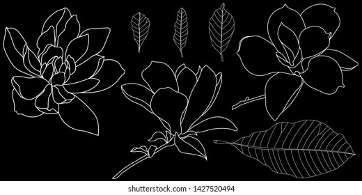 Set of  graphical magnolia flower. Vector.A set of magnolia flowers and magnolia leaves.