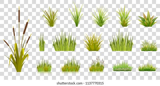Set of grass blades on a transparent background green grass in bunches of gardening lawn and bulrush with reflection vector illustration