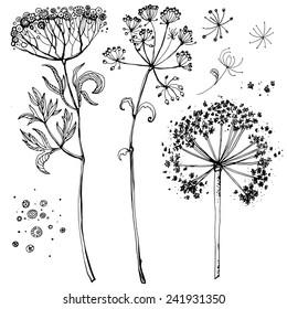 Set of grass narisovyh black line, summer grass. Verctor graphics, black line on a white background