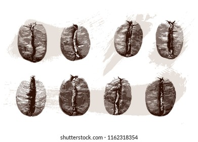 Set of gravure coffee beans on white background. Vector illustration. Can be used for your design, promo, adv. EPS10.