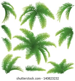 Set green branches with leaves of palm trees on a white background. Drawn from life. Vector
