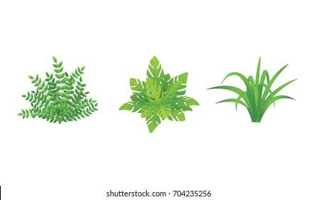 Set of Green Bushes Illustration.Garden plants with Various Shape