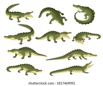 Set of green crocodile character big carnivore reptile cartoon animal design flat vector illustration isolated on white background