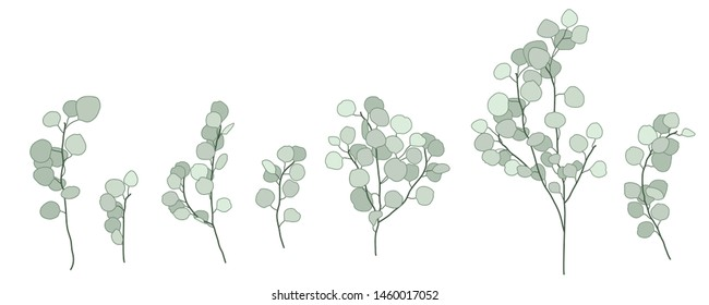 Set of Green Eucalyptus Branch Simple Vector Design Hand-drawn in Pale Green Tones
