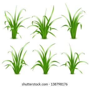Set of Green grass, vector illustration