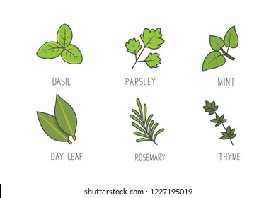 Set of green herbs and branches vector. Bay leaf, rosemary, mint aroma herbal line art icons.