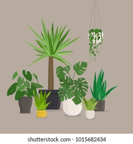 Set of green indoor house plants in pots. Vector illustration