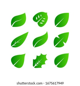 Set of Green leaf icon design. Eco symbol concept isolated on white background. Vector illustration