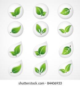Set of green leaves. Floral element for design.