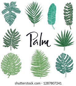 Set of Green Palm leaves Hand drawing Isolated object Sketch style Tropical tree
