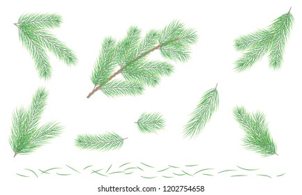 Set Green pine branch. Fir tree branch. Element for design and Christmas composition. Vector