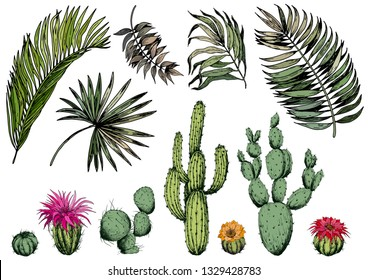 Set of green tropical leaves and cactus plants with flowers. Isolated elements for design. Hand drawn vector.
