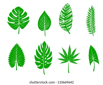 Set of green tropical leaves. Vector illustration