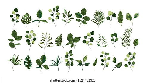 Set of greenery leaves twig branch plant eucalyptus tropical leaf spring object flora in watercolor style. Vector botanical decorative illustration for wedding invitation card