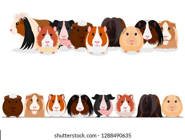set of guinea pigs group and border