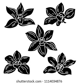 Set of hand drawing vanilla flowers  isolated on black background. Vanillas doodle spicy herbs vector.