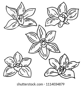 Set of hand drawing vanilla flowers  isolated on white background. Vanillas doodle spicy herbs vector.