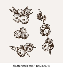 set of hand drawn acai. sketched style berries collection
