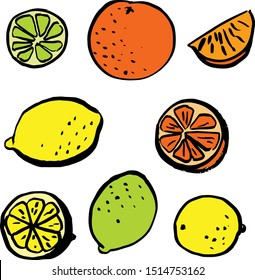 Set of hand drawn agrumes, lemons, oranges, citruses