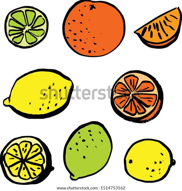 Set of hand drawn agrumes, lemons, oranges, citruses