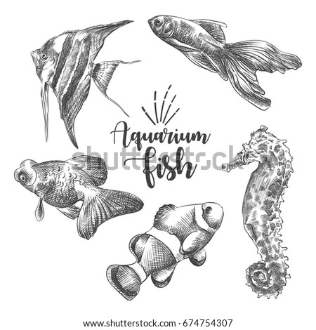 Set Hand Drawn Aquarium Fish Sketch Stock Vector Royalty Free