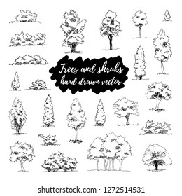 Set of hand drawn architect trees and shrubs. Vector sketch. Architectural illustration, landscape elements