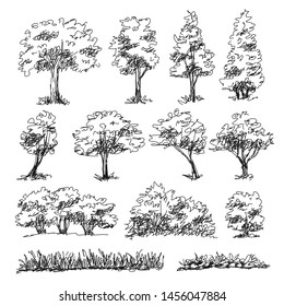 Set of hand drawn architect trees. Tree Sketch Architectural illustration landscape