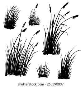 Set of hand drawn beach grass. Vector.