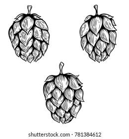 Set of hand drawn beer hop illustrations. Design element for logo, label, emblem, sign. Vector illustration