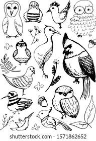 Set of hand drawn birds doodles. Vector sketch illustration