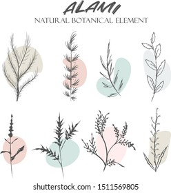 Set of hand drawn botanical element, natural, leaf icon and line art. Alami mean natural in indonesian language. botanical, branch, creative, decor, design,drawing, drawn, element, floral, flower