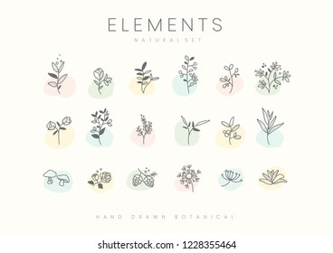 Set of hand drawn botanical elements vector