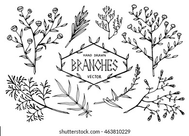 Set of hand drawn branches.Isolated on white.Vector illustration.