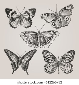 Set of hand drawn butterflies isolated on white background. Butterfly in sketch style. Retro hand-drawn vector illustration.