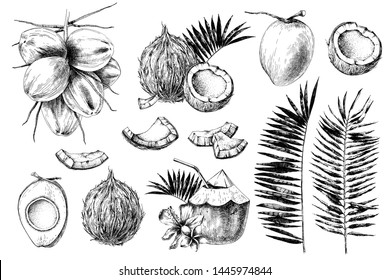 Set of hand drawn coconuts. Vector illustration in retro style