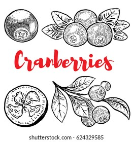 Set of hand drawn cranberries isolated on white background. Design elements for label, emblem, sign, poster, menu. Vector illustration