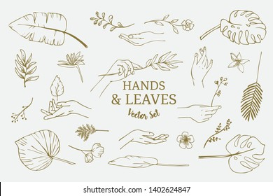 Set of hand drawn delicate line art vector illustrations of hands and various tropical leaves and flowers.
