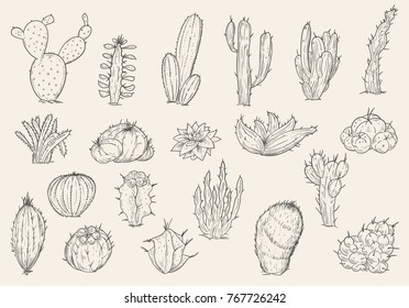 Set of hand drawn different cactuses in sketch vintage style. Vector illustration.